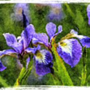 Textured Bearded Irises Poster