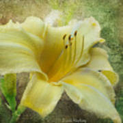 Textured Daylily Poster
