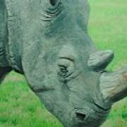 Textured Rhino Poster