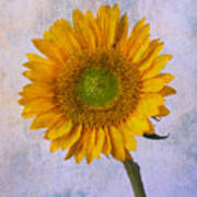 Textured Sunflower Poster