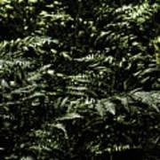 Textures Of A Rainforest Poster