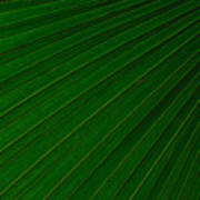 Texturized Palm Leaf Poster