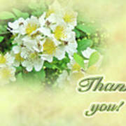 Thank You Card - Multiflora Roses Poster