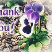 Thank You Pansy Poster