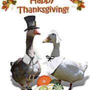 Thanksgiving Pilgrim Ducks Poster