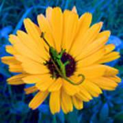 Imaginary Flower Poster