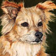 The Adventurous Dog Poster