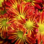 Chrysanthemum Bouquet Poster