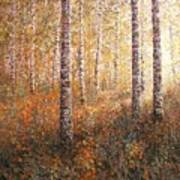 The Autumn Sun In The Birch Forest Poster