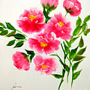 The Beauty Of Peonies Poster