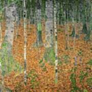 The Birch Wood Poster