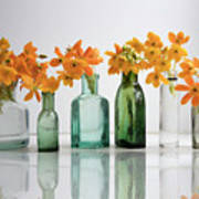 the Blooming yellow Ornithogalum Dubium in a transparent bottle instead vase Poster