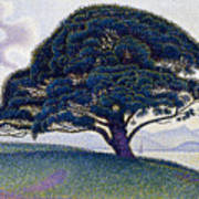 The Bonaventure Pine  Poster