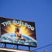 The Bulldog On Top Of The World Poster