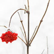 The Bunch Of Winter Rowan Poster