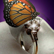 The Butterfly And The Engagement Ring Poster