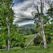 The Buzzard Trees Poster