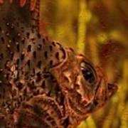 The Copper Rockfish Poster