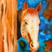 The Curious Appaloosa Poster