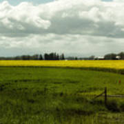 The Curve Of A Mustard Crop Poster
