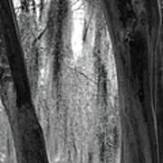 Cypress In The Bayou Poster