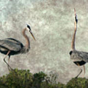 The Dance Of Life - Great Blue Herons In Mating Ritual - Digital Painting Poster