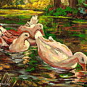 The Duck Pond At Botanical Gardens Poster