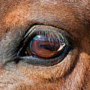 The Equine Eye Poster by Terry Kirkland Cook
