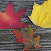The Fallen Leaves Of Autumn Poster