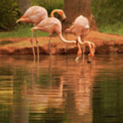 The Flock - The Serenity Of Flamingos At Water's Edge Poster