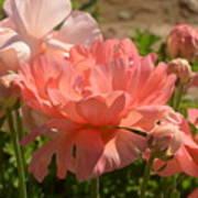 The Flower Field Season Poster