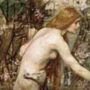 The Flower Picker Study John William Waterhouse Poster