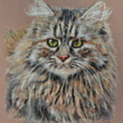 The Fluffy Feline Poster by Terry Kirkland Cook