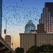 The Frost Bank Tower Stands Guard As 1.5 Million Mexican Free-tail Bats Overtake The Austin Skyline As They Exit The Congress Avenue Bridge Poster