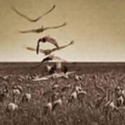 The Gathering - Sandhill Cranes Poster