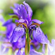 The Gentleness Of Spring 5 - Vignette Poster