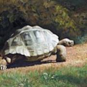 The Giant Tortoise Is Walking Poster