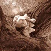 The Grand Oak Poster by Catherine Natalia  Roche
