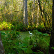 The Great Corkscrew Swamp Poster