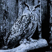 Majestic Great Horned Owl Bw Poster