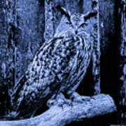 Majestic Great Horned Owl Blue Indigo Poster