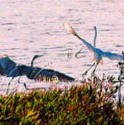 The Heron And The Egret Poster