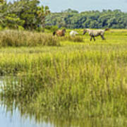 The Horses Of Cumberland Island Poster