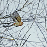The House Finch In-flight Poster