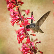 The Hummingbird And The Spring Flowers  Poster