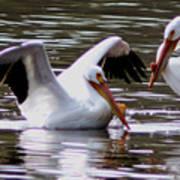 The Impressive Landing Pelican Poster