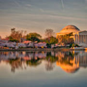 The Jefferson Memorial And Cherry Trees In Bloom Poster