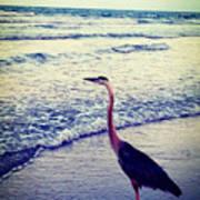 The Joy Of Ocean And Bird Poster