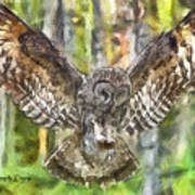 The Largest Owl Poster