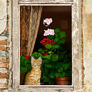 The Little Tuscan Tiger Poster by Bob Nolin